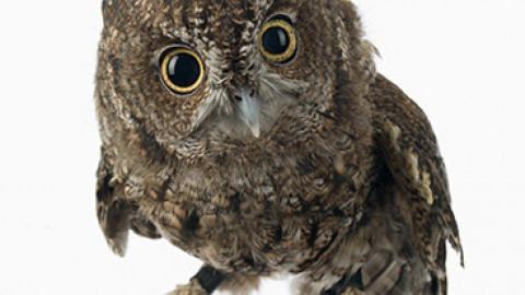 OWL Virtual Summer Camp – July
