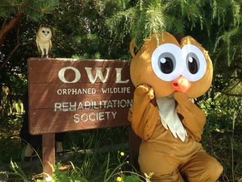 Summer Hours at OWL