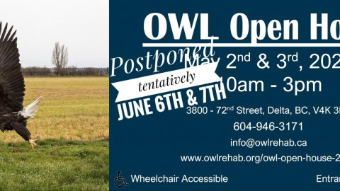OWL Open House 2020