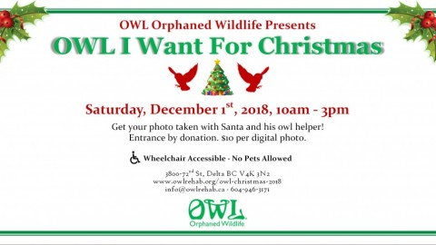 OWL I Want For Christmas 2018