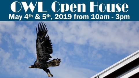 OWL Open House 2019