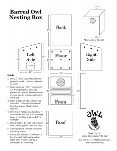 download a printable version of our barred owl box diagram
