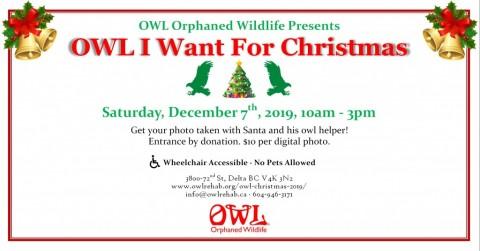 OWL I Want For Christmas 2019