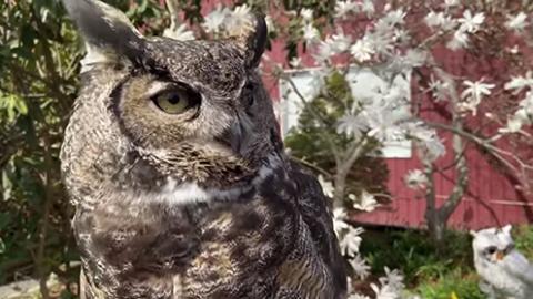 OWL Virtual Summer Camp – August