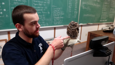 All About Owls Part 1 (Free Event)