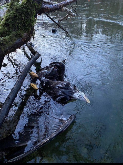 Dead eagle found tangled in fishing line serves as leave-no-trace lesson