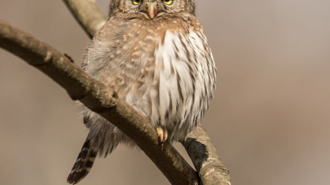 Come Join Us and the Richmond Nature Centre to Learn about the Raptors of BC